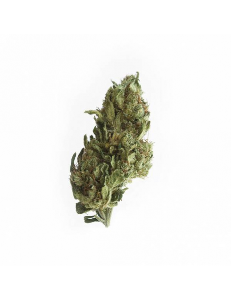 LEMON HAZE 9,2% - Fleurs de CBD Greenhouse