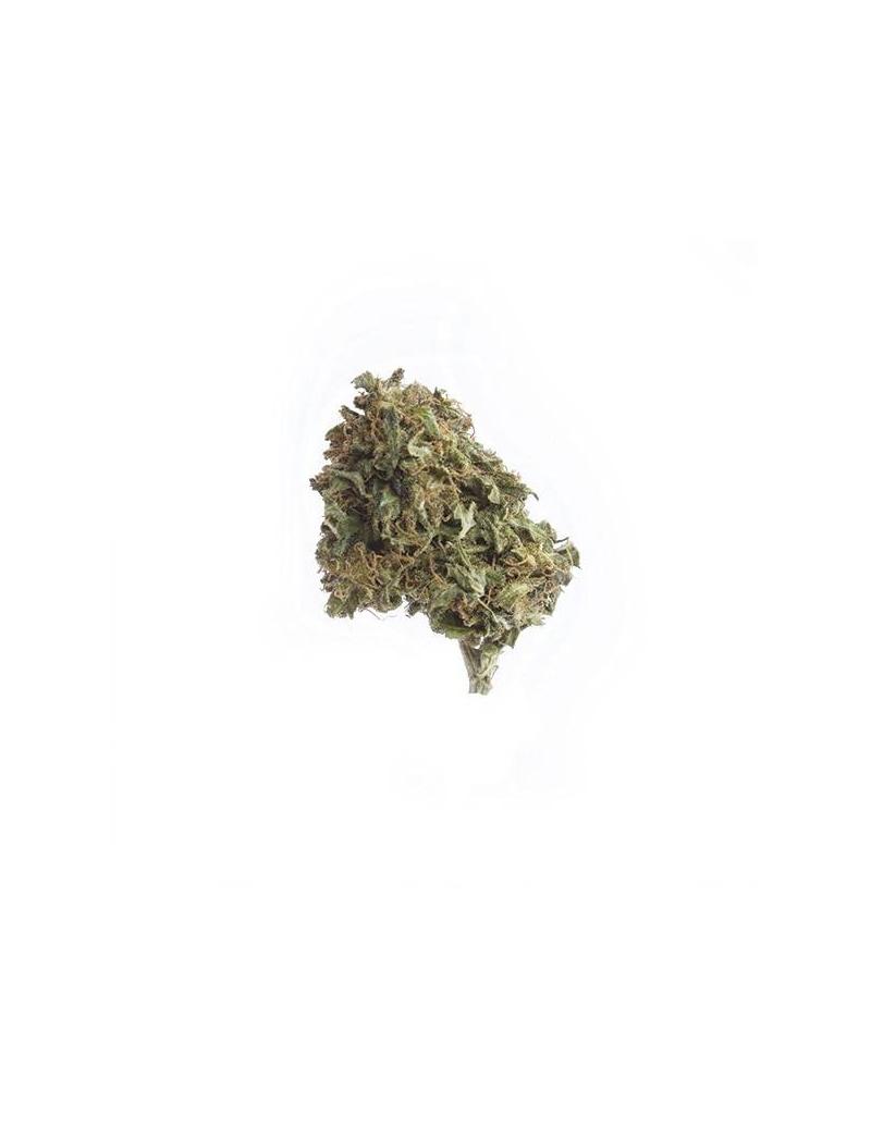 AMNESIA 12,8% - Fleurs de CBD INDOOR